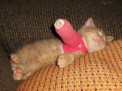 This melts my heart .   I  had a dog that broke his front leg and had to have a cast on for 6 weeks.    This reminds me of him.: Cats, Animals, So Cute, Pet, Poor Kitty, Kittens, So Sad, Poor Baby
