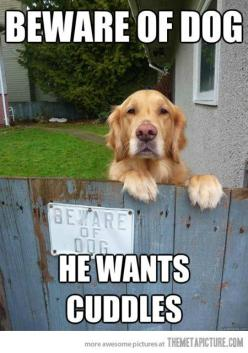 This might just be my dog !: Animals, Dogs, Pet, Beware Of Dog, Funny Animal, Bewareofdog, Golden Retriever