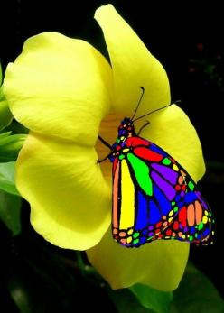 This must be the most colorful butterfly! If you have seen a more colorful one please comment :) | From @GuessQuest collection: Beautiful Butterflies, Nature, Color, Flutterby, Flowers, Yellow Flower, Animal
