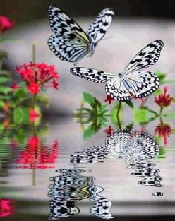 This photo reminds me of a saying.......without change, there would be no Butterflies.........;): Beautiful Butterflies, Amazing, Butterfly, Nature, Beauty, White Butterflies, Photo, Beautiful Creatures, Animal