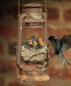 . This unusual swallow's nest was caught on camera by Robert Fuller, a wildlife photographer and artist, who returned to his home in Thixendale, North Yorks, from his summer holiday to find the nesting birds.Picture: RobertFuller/BNPS: Animals, Nature