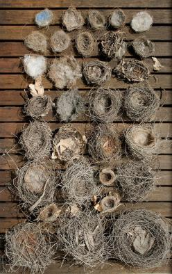 This would be a perfect display for the empty wooden wall on the back porch... except that I donated my bird nest collection to the school!: Birdnests, Nature, Birds Nests, Birdhouse, Birdsnests, Nest Collection, Bird Nests, Bird S Nests