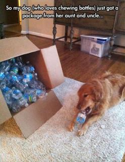 this would have made our old dog's life... nothing she loved more than a good plastic bottle: Plastic Bottles, Dogs, Funny Pictures, Funnies, Puppy, Aunt, Animal, Loves Chewing, Water Bottles