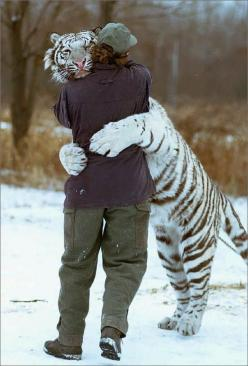 "(Tiger)""Oh my gosssshhh. You look so gooooood. Have you lost weight? Come in, come in. It's so great to finally have you for dinner. No really-I'm having you for dinner. Run fool!!!: White Tigers, Big Hug, Animals, Big Cats, Friends, Pet, Tige"