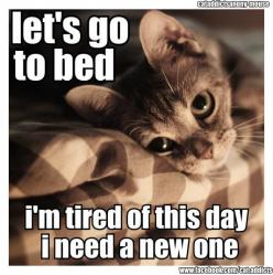 tired of this day, need a new one: Cats, Animals, Kitten, Beds, Stuff, Quotes, Funny, Things, Kitty