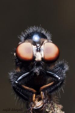 To break the barriers of speciesism: Photograph Robberfly, Eyes Animal, Macro Photography, Amazing Eyes, Calcite Eyes, Art Insects, Macro Eyes