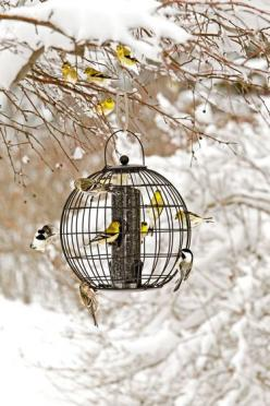 To keep the bullying blue jays and red winged black birds away! Mixed Seed Globe Cage Feeder: Seed Globe, Bird Feeders, Globe Cage, Birds, Garden