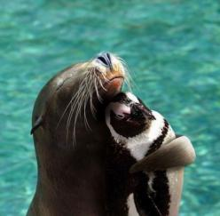 Together we'll rule the seas...: Seals, Animals, Friends, Sweet, Hug, Sea Lion, Penguins, Funny Animal, Things