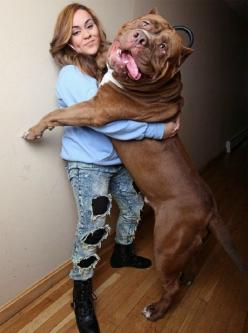 Top 10 Best Protective Dog Breeds: Animals, 175 Pound, Pitbull, Pets, Pit Bull, Bigdogs, Hulk, Big Dogs