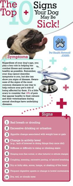 Top 10 Signs Your Dog May Be SICK! www.pethealthnetwork.com: Top 10, Doghealth Sickdog, Pet Health, 10 Signs, Sick Dog, Dogs Health, Dog Health, Dogs Doghealth, Dog Sick