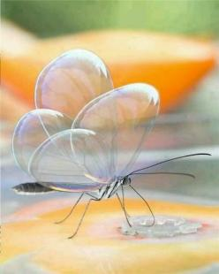 Translucent butterfly-: Animals, Nature, Butterflies, Beautiful, Photo