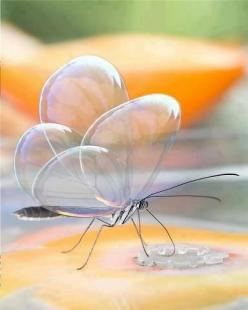 Translucent butterfly - clearly beautiful!: Animals, Nature, Butterflies, Beautiful, Photo
