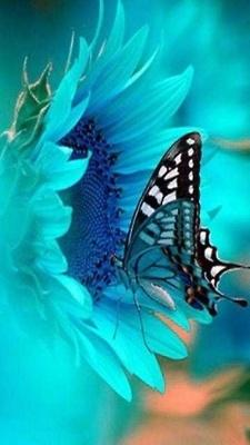 Turquoise -Uplifting color: Beautiful Butterflies, Blue Butterfly, Nature, Color, Flutterby, Blue Flower, Animal