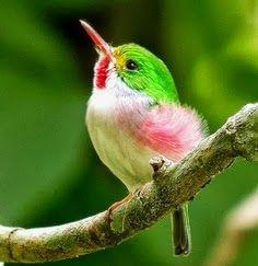 Type 1's bird is a hummingbird. The are birds that flit around quickly, quite like most Type 1 women. They are very colorful in happy, bright tones, which are usually colors that Type 1's really love. They also are the only birds that can fly back