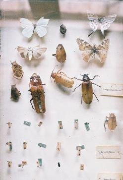 Untitled | by Fernando Farfán: Insects Ewww, Dried Bugs, Insects Bugs, Pinned Specimens, Blincoe Gcse Photography