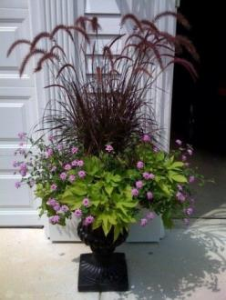 Urn - Red fountain grass, sweet potato, verbena. Container garden. Container planting.: Sweet Potato Vine, Potato Vines, Fountain Grass, Purple Fountain, Container Gardening