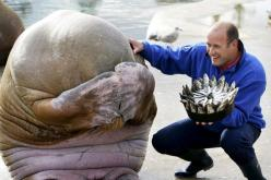 walrus' reaction after getting a birthday cake made out of fish... so cute it hurts: Picture, Fish Cake, Happy Birthday, Animals, Walrus S, So Cute, Birthdays, Funny, Birthday Cakes