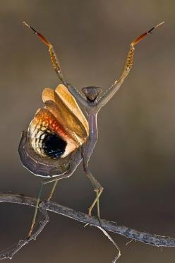 Wassup playa!: Animals, Nature, Bugs, Creature, Insects, Photo, Praying Mantis