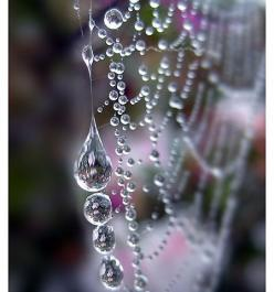 : Water Drops, Spider Webs, Beautiful, Dewdrops, Rain Drops, Morning Dew, Dew Drops, Water Droplets