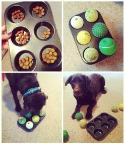 We love this simple DIY dog boredom buster! It will keep any dog entertained!: Idea, Dogs, Dog Game, Pet, Diy Dog Toy, Dog Boredom Buster, Animal
