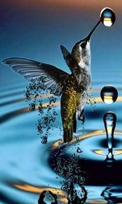 What a shot!: Water Drops, Humming Birds, Waterdrop, Humming-Bird, Raindrop, Hummingbirds, Animal