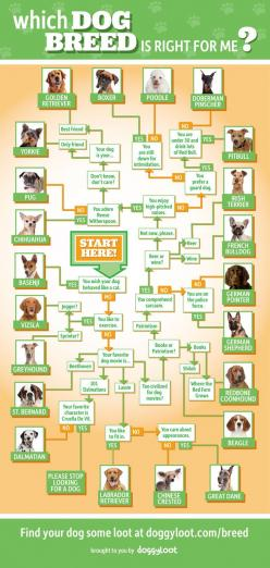 Which Dog Breed Is Right For Me? Infographic: Great Danes, Fun Infographic, Dogs, Drink Lots, Energy Drinks, Dog Breeds, Animal