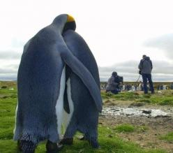 who are those people & what do they want: Picture, Photos, Penguin Love, Animals, National Geographic, Funny, Penguins