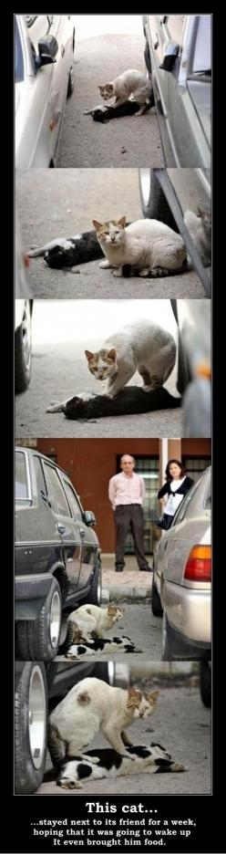 Who says animals don't feel?: Cats, True Friendship, Animals, Sweet, Animal Abuse, My Heart, So Sad