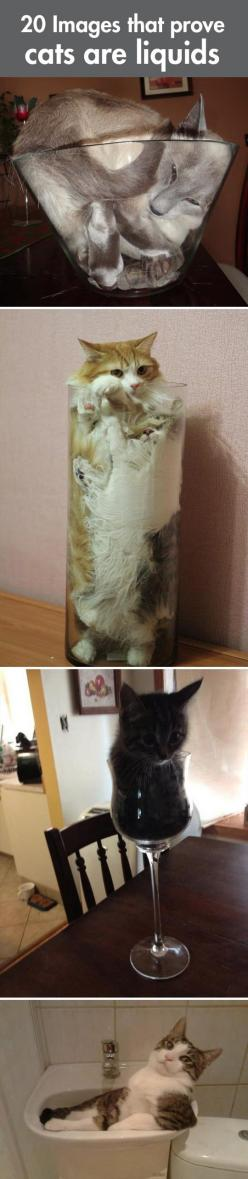 Why cats are liquids… click the picture to see all 20: Cats Humor, Funny Animals, Funny Cats Memes, Lolcats Meme, Liquid Cat, Kitty, Funny Cats Liquid Bowl Cute