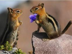Will you marry me? Visit jimisound.com for free entertainment industry training and information, personal development and financial success training and of course love.: Sweet, Adorable Animals, Squirrels, Creature, Chipmunks, Marry Me, Photo, Flower