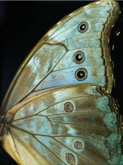 winding in & winding out, the shine of it has caught my eye & roped me in, so mesmerizing and so hypnotizing,, I am captivated. I am...: Inspiration, Nature, Butterflies, Color, Beautiful, Art, Butterfly Wings, Animal