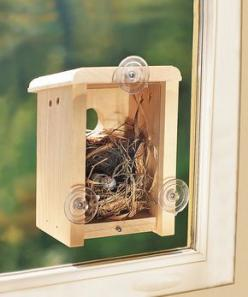 Window Nest Box: Birdhouses, Boxes, Windows, Window Nest, Nests, Bird Houses, Birds