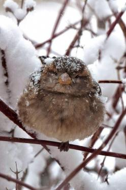 Winter bird. Don't forget to put out seeds, nuts and suet for the winter birds.: Animals, Sweet, Nature, Winter Wonderland, Beautiful Birds