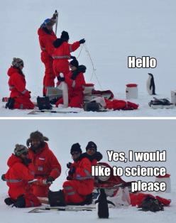 Yes, I would like to science, please.: Giggle, Animals, Science Penguin, Funny Stuff, Penguins, Funnies, Humor