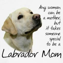 Yes, patience  :)   . . .  and LOTS of it! Oh! But the love they give back is so worth it!: Esme Labs, Labrador Retriever, Puppy Dogs, Labrador Humor, Chocolate Labs, Labrador Mom, Yellow Labs, Lab Moms, Lab Humor Dog