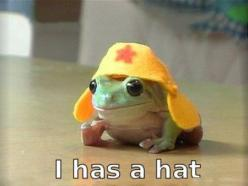 Yes, Tiny Frog, you certainly do.: Hats, Animals, Stuff, Sgt Frog, Funnies, Humor, Things, Funny Animal, Frogs