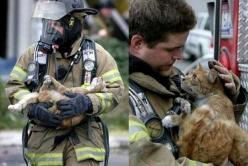 You can see the gratitude in this poor cat's eyes.  The fact that a firefighter would go to the trouble of rescuing a cat makes my day. God, I love these pictures.: Picture, Cats, Animals, Heroes, Pet, Firefighters, Faith In Humanity, Photo, Kitty