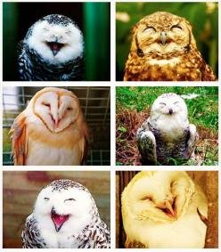 you gotta keep smiling ;): Animals, Funny, Smiling Owls, Happy Owls, Laughing Owls, Things, Smile, Birds, Hoot