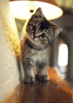 You left your pinterest logged onto my computer at LC and I havent been on pinterest in forever so I havent noticed it but im gonna log out now. but here's a cat. Love, Cassidy <3: Cats, Animals, Kitty Cat, Sweet, So Cute, Pet, Cute Cat, Baby, Kitt