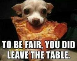 You may think this isn't possible but you would be wrong...: Funny Animals, Dogs, Chihuahuas, Stuff, Pizza, Pets, Funnies