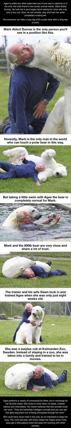 """You see, I don't look at these things and think """"awww, da widdle powar beawr is so cute"""" instead I think """"Cool, the polar bear could rip him to shreds at any given moment but it doesn't"""": Wild Animal, Sweet, Pet Polar, Humor Funnyp"""