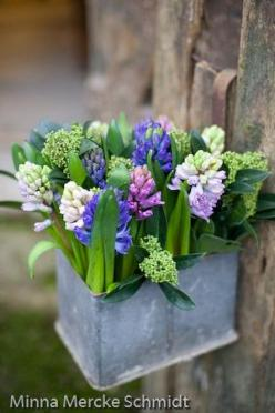 Zinc au jardin - Minna Mercke Schmidt - Nat et nature: Spring Flowers, Floral Arrangement, Hyacinth, Garden, Flower