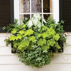 100 Creative Container Gardens | Brighten a Shady Spot | SouthernLiving.com: Garden Container, Gardening Idea, Key Lime Pie, Outdoor, Shady Spot, Fall Container, Container Gardening, Window Boxes