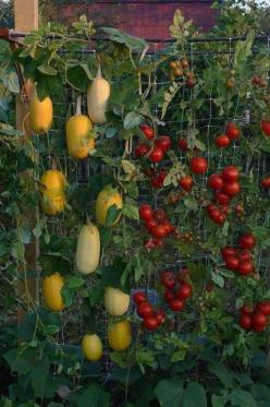 101 Gardening Secrets The Experts Never Told You | Food and Farming  Do you grow your own vegetable garden. If not why not. You can even grow a few delicious vegetables in containers.: Gardening Secrets, Idea, 101 Gardening, Vegetable Garden