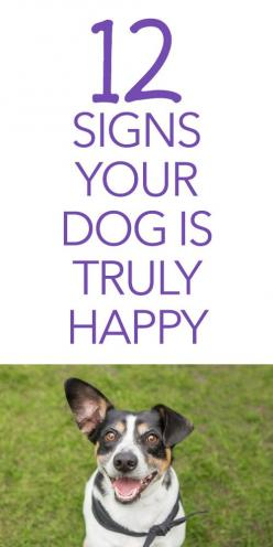 12 Signs Your Dog Is Truly Happy: Dogs Ideas, Pet Dogs, Animals Dogs, Pets Dogs, Dogs Puppies, Dog Photos Ideas, Dog Photo Ideas, Dog And Baby Photography