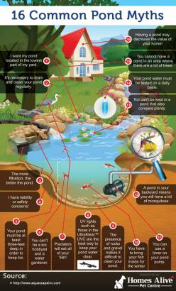 16 Common Pond Myths (infographic): Common Pond, Outdoor Pond, Farm Pond, Diy Pond, Pond Myths, Amazing Pond