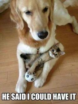 16 Funniest Pet Photos with Captions: Cats, Kitten, Animals, Friends, Dogs, Sweet, Pets, Funny, Adorable