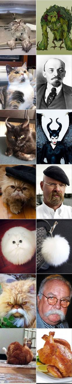 18 Cats That Look Like Something Else: Funny Animals, Kitty Cats, Humorous Cats Funny, Animal Humor, Funny Animal Pictures Humor, Animals Funny Humor, Funny Stuff, 18 Cats, Funny Cats Humor