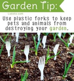 20 Insanely Clever Gardening Tips And Ideas: Plastic Forks, Garden Ideas, 20 Insanely, Gardeningtips, Garden Tips, Clever Gardening