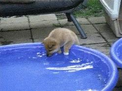 23 Photos Guaranteed To Instantly Cheer You Up 31 - https://www.facebook.com/diplyofficial: Cute Dog Gif, Shiba Inu, Gif S, Cute Animal Gif, Funny Gif, Gifs